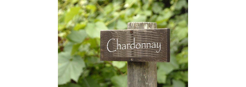 Chardonnay - en af verdens mest populære hvidvinsdruer