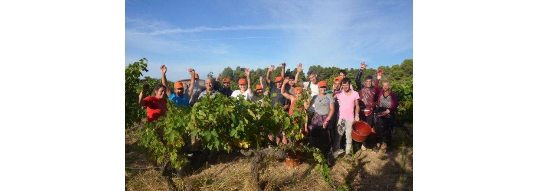 Succesfuld fransk vinproducent: Så er det tid til at drikke!