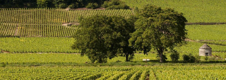 Håndplukkede vine fra top-producenter