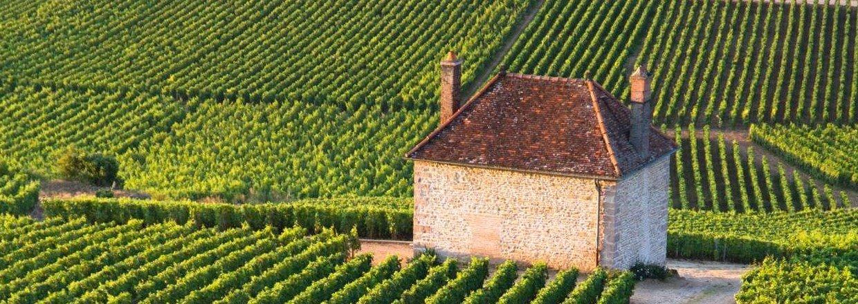 Stort udvalg af økologiske og naturlige vine